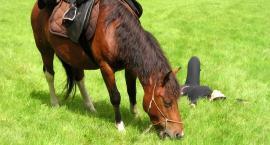 3-dniowy rajd konny