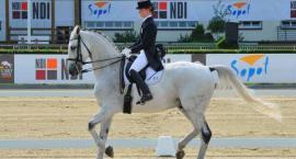 Jak przygotować konia do zawodów? (pod względem pielęgnacyjnym)