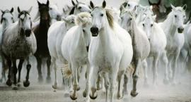 Cytaty i myśli jeździeckie