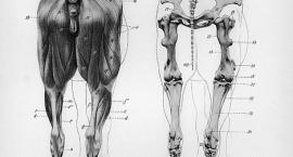 Części ciała u koni