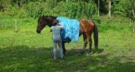 Strach ma wielkie oczy - odczulanie konia
