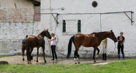 Inteligentne mycie nóg koni
