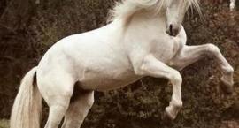 wiersze o koniach