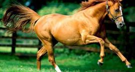 Przysłowia związane z końmi