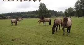 Obóz konny w janowie lubelskim