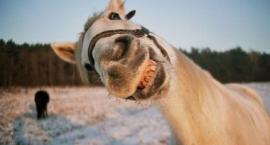 Dowcipy o koniach - czyli trochę końskich dowcipów cz.2