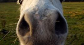 Koński humor - czyli trochę dowcipów
