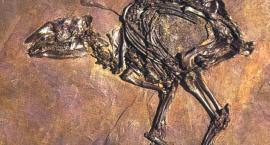 Przodkowie konia domowego, czyli pierwsze konie