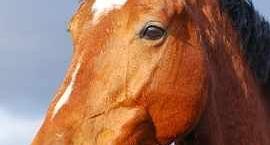 Podkuwanie koni zimą - czy warto?