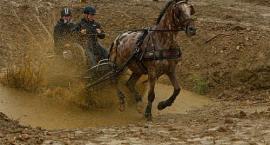 Powożenie końmi - zawody w powożeniu koni
