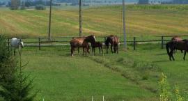 Codzienne opieka nad koniem, wyprowadzanie konia
