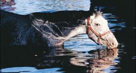 Oswajanie konia z wodą