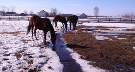 Zasady pojenia koni