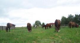 Gdzie kupić konia?