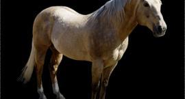 Witaminy dla koni - koktajl witaminowy dla koni