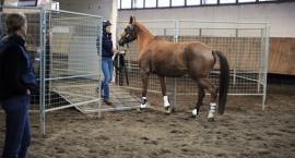 Podróżowanie z koniem