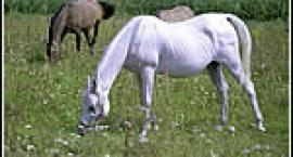 maści koni