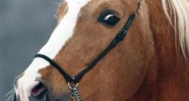 Konie i Rumaki - lutowe wydanie