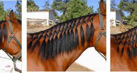 Końskie fryzury