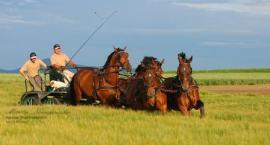 Piotr Mazurek – konie, to nasza  tradycja