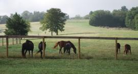 4 kwartały w żywieniu koni - III kwartał