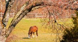 Układ pokarmowy konia - 4 kwartały w żywieniu koni - I kwartał