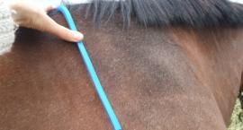 Konie - skóra