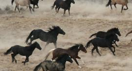 Konie - maści jednolite