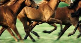 Podział koni na typy konstytucyjne