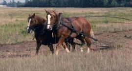 Typy użytkowe koni