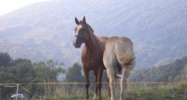 Kolka u konia – zmora zwierząt i właścicieli