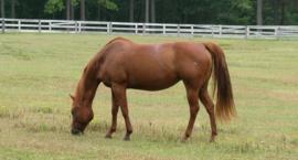 Dzierżawa konia – ile warta i czy warto?