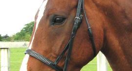 Kiełznanie konia