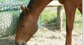 Granulat dla koni, podstawy o żywieniu konia