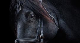 Przyczyny biegunki u konia