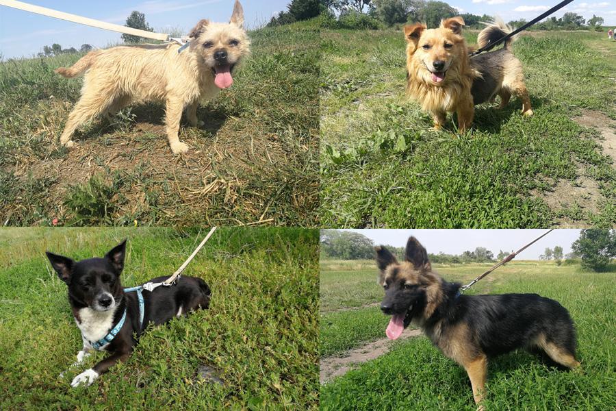 Zwierzaki do adopcji, Szukają nowego kupuj adoptuj! - zdjęcie, fotografia