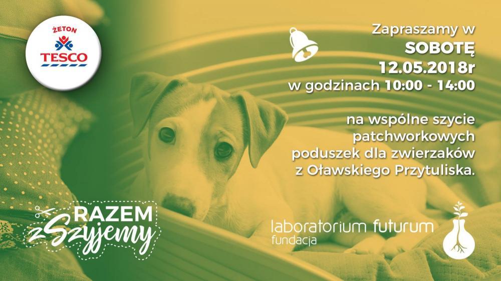 Zwierzaki do adopcji, Będą szyć poduszki oławskiego schroniska - zdjęcie, fotografia