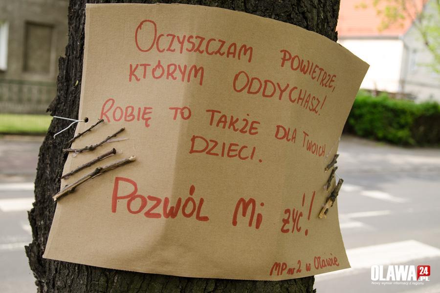 Mieszkańcy, Doskonała inicjatywa najmłodszych mieszkańców chcą chronić drzewa - zdjęcie, fotografia