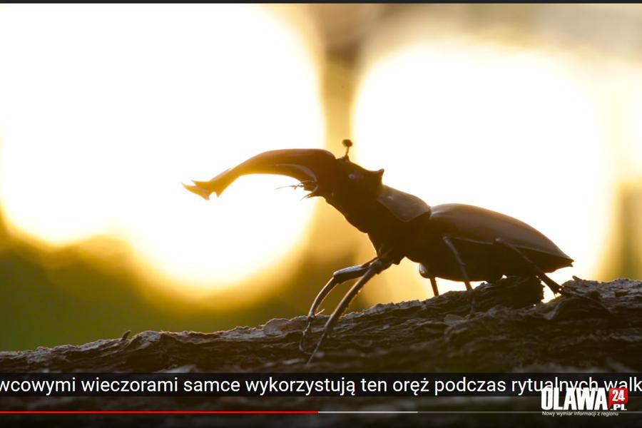 Gmina Oława, Wiosenna wycieczka fauną florą [VIDEO] - zdjęcie, fotografia