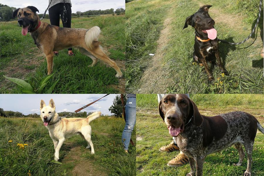 Zwierzaki do adopcji, Czekają schronisku adopcję - zdjęcie, fotografia