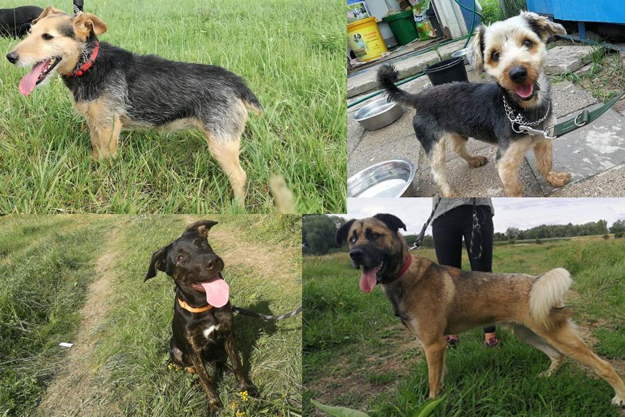 Zwierzaki do adopcji, Szukają dobrego - zdjęcie, fotografia