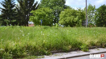 zbiorcza, Wysoka trawa - zdjęcie, fotografia