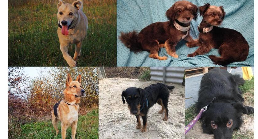 Zwierzaki do adopcji, zimę - zdjęcie, fotografia