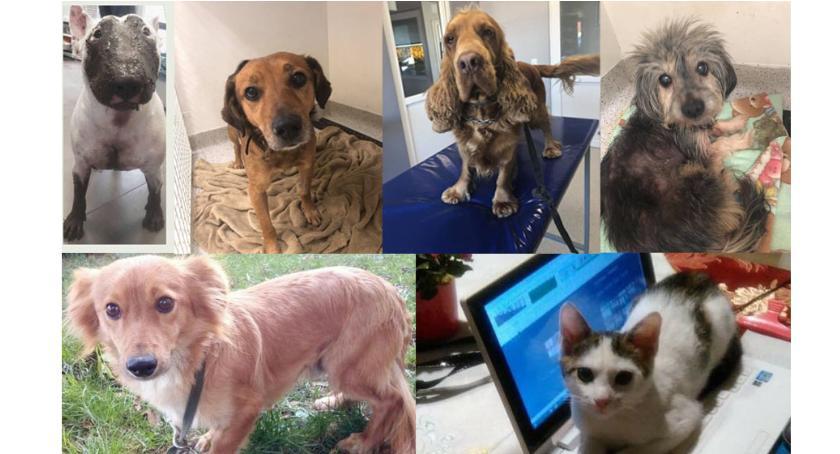 Zwierzaki do adopcji, święta - zdjęcie, fotografia