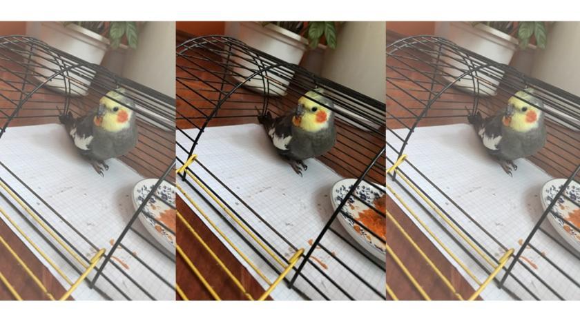 Komunikaty, uciekła papuga - zdjęcie, fotografia