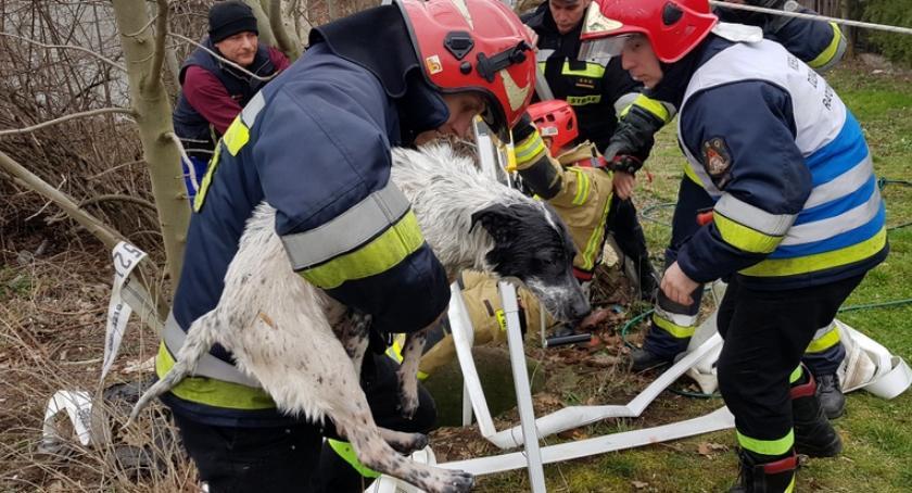 Akcje, wpadł studni uratowali strażacy - zdjęcie, fotografia