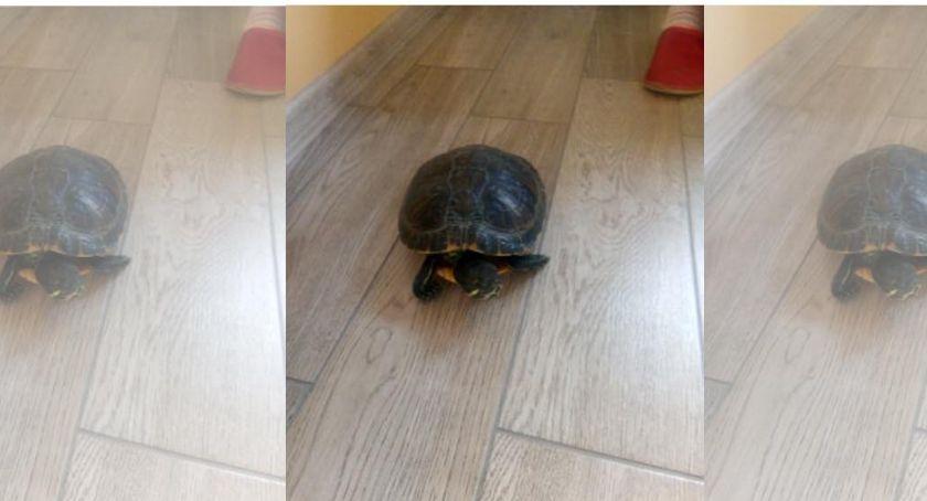 Komunikaty, osiedlu chodził żółw - zdjęcie, fotografia