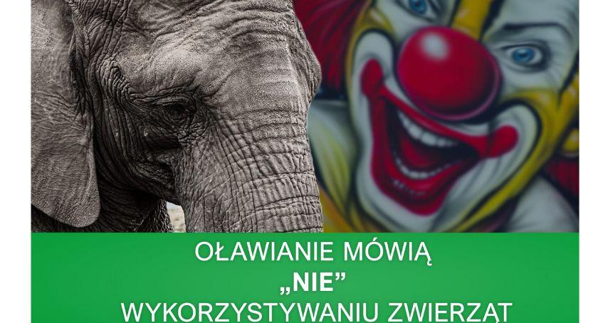 Mieszkańcy, Oława Oławianie chcą cyrków zwierzętami - zdjęcie, fotografia