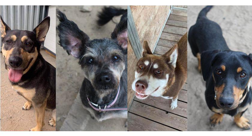 Zwierzaki do adopcji, Potrzebują nowego kochającego - zdjęcie, fotografia