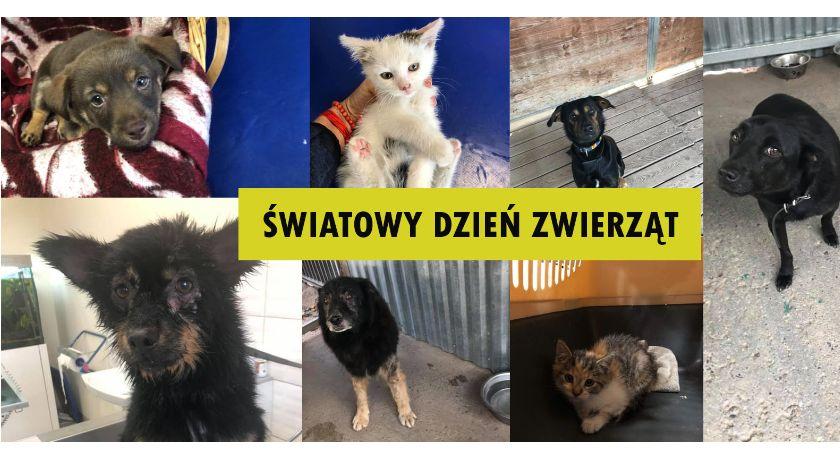 Zwierzaki do adopcji, Dzisiaj Światowy Dzień Zwierząt kupuj adoptuj! - zdjęcie, fotografia